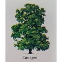 Albero Castagno
